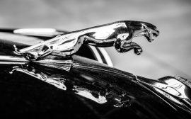 COC Jaguar